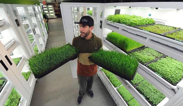 Urban Farming Becomes Serious Business