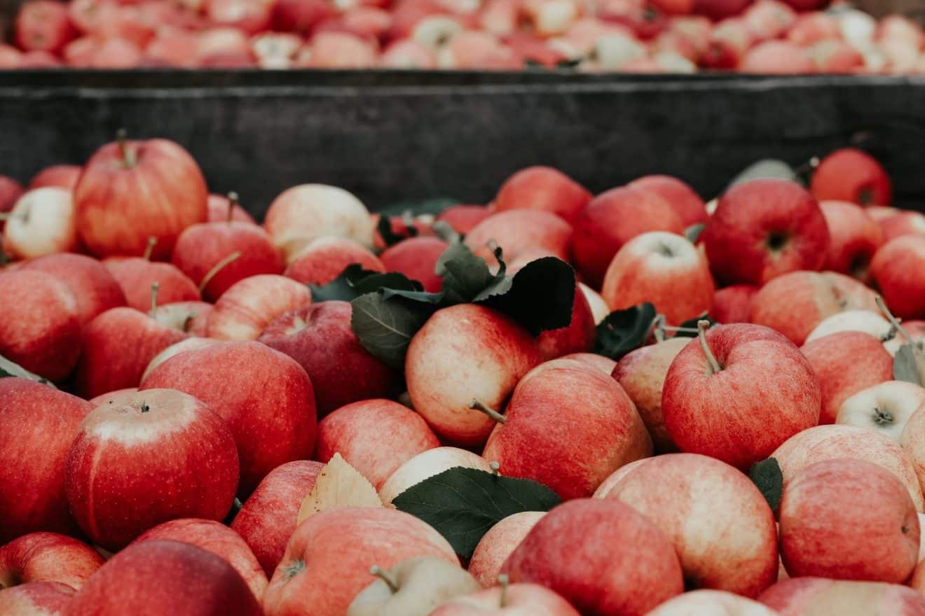 pommes-cidre
