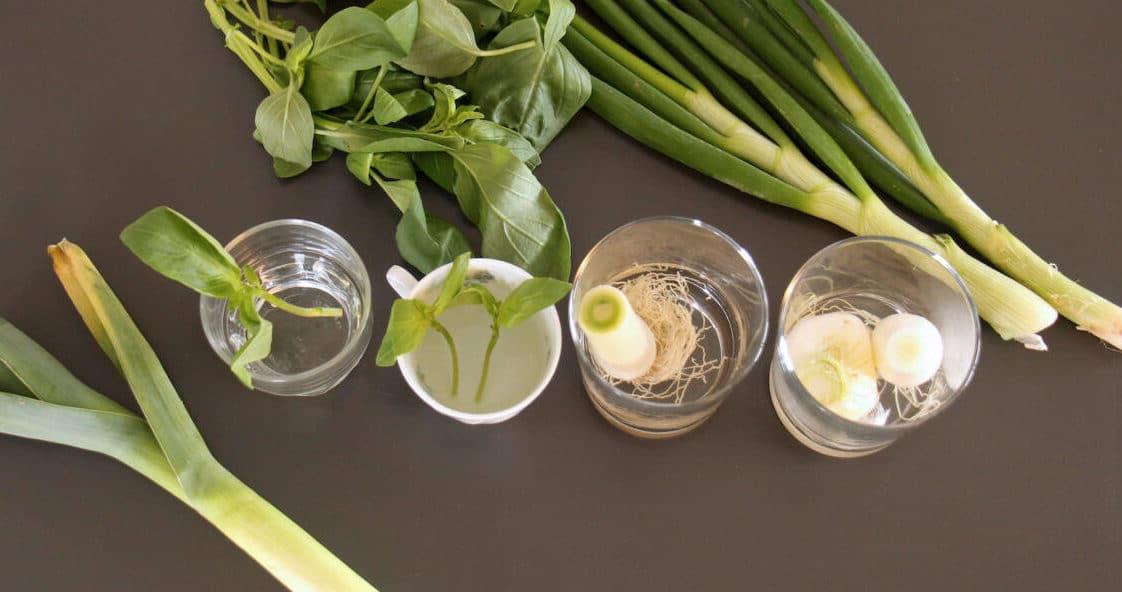 regrowing-cuisine-et-confinement