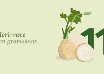 Celeri-Rave_blog
