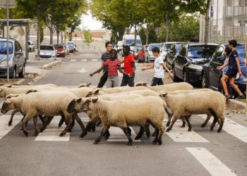 couv-la-bergerie-urbaine