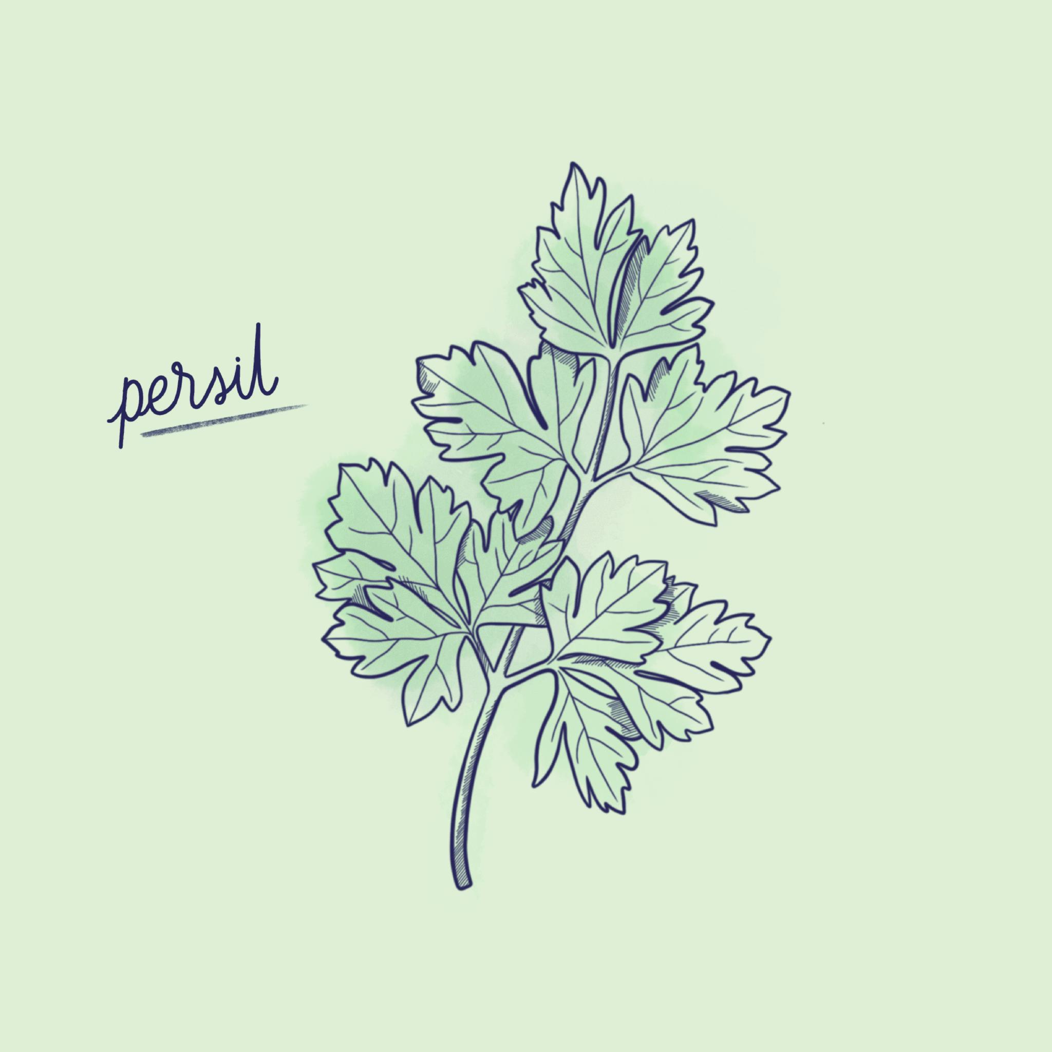 Persil_Légume-Post