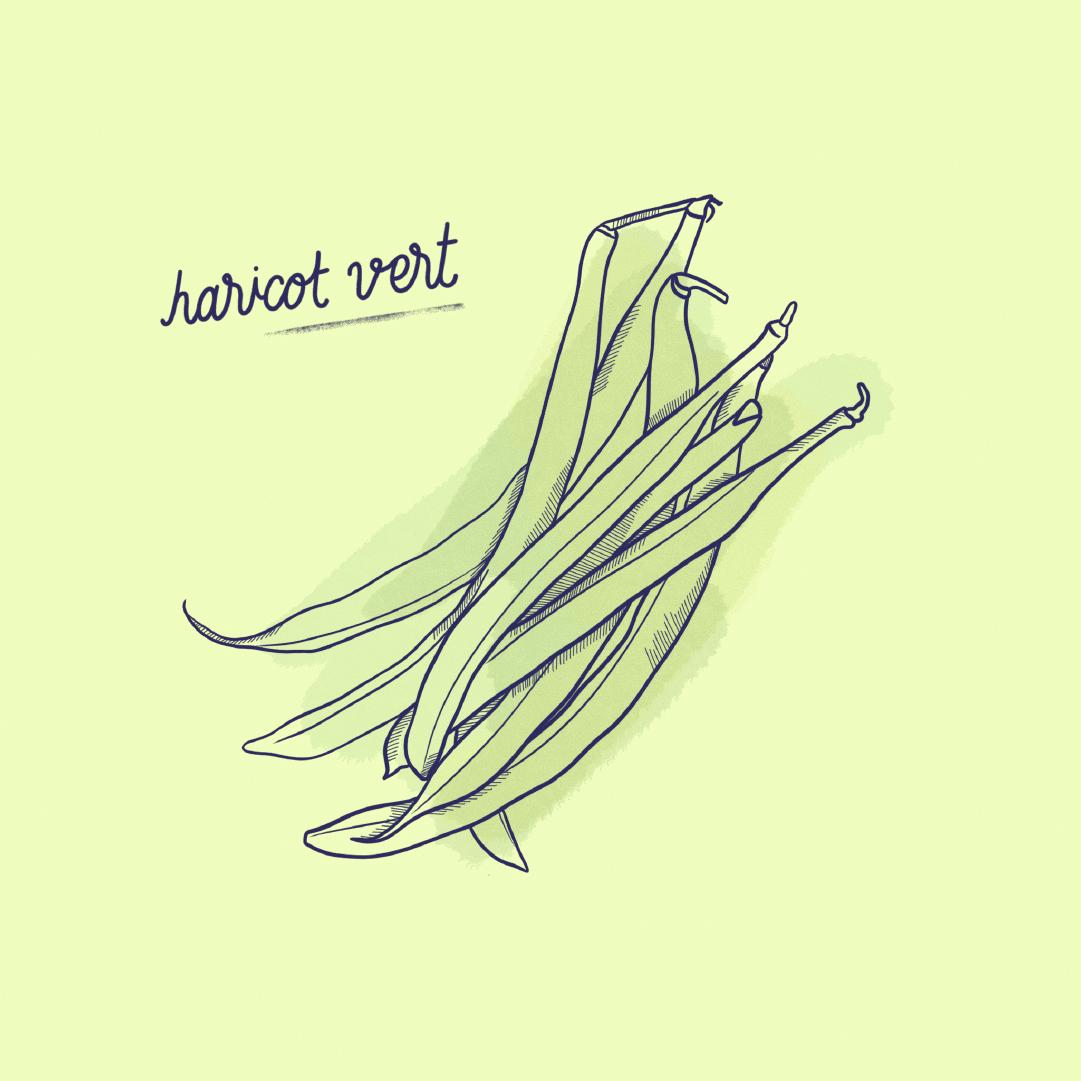 Haricots-Verts_Fruit-Post