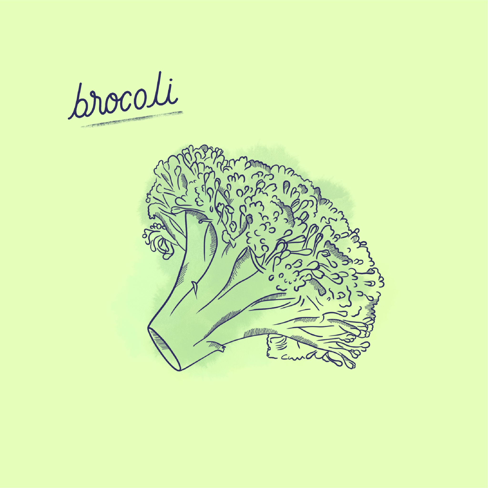 Brocoli_Légume-Post