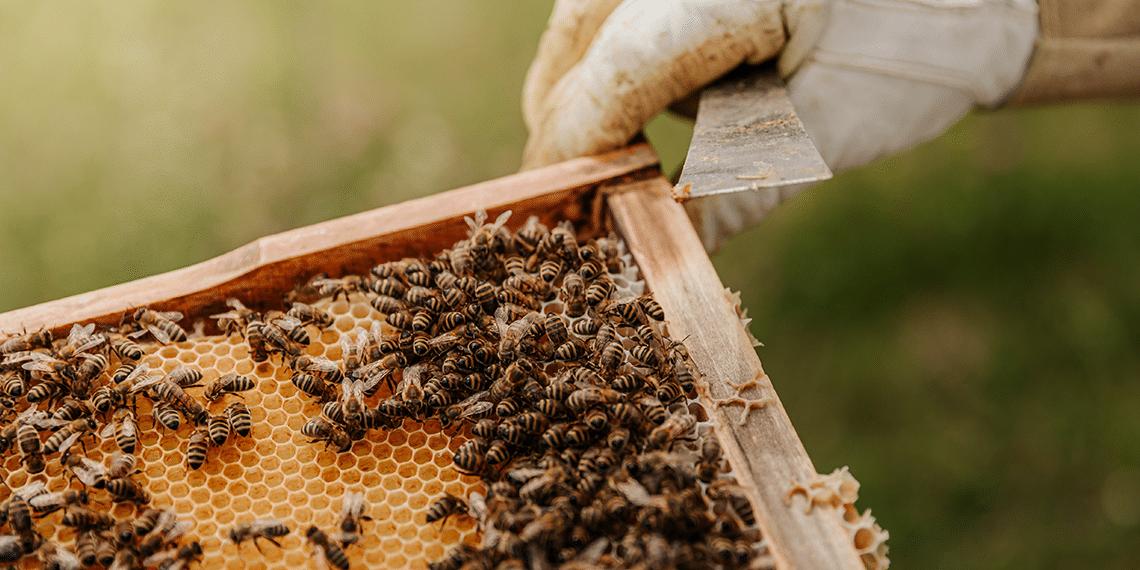couv-abeilles